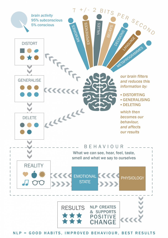 Infographic / Illustration – Dr Bridget